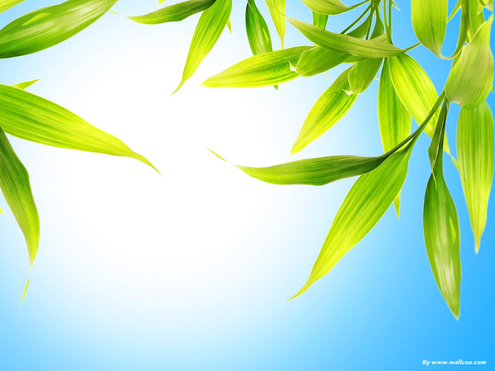 春天的绿色植物背景高清图片素材(12P)[中国P