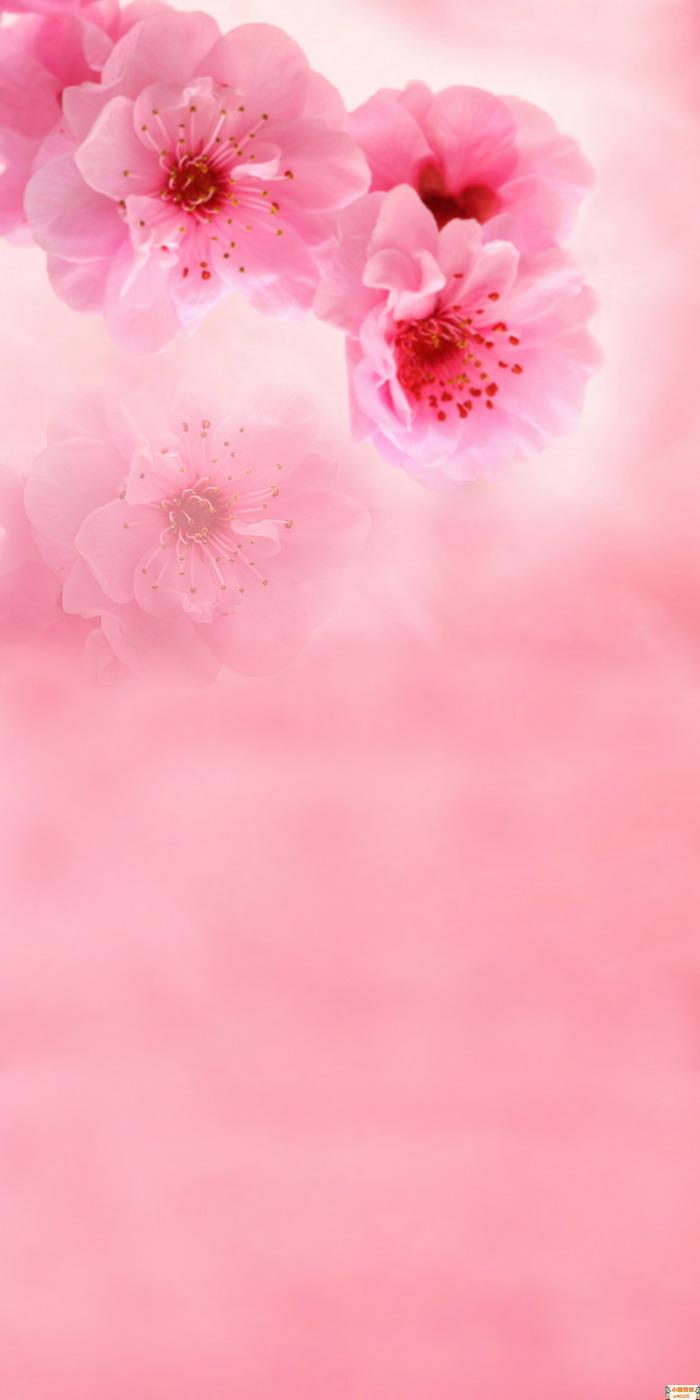 照片常用的背景素材-春天