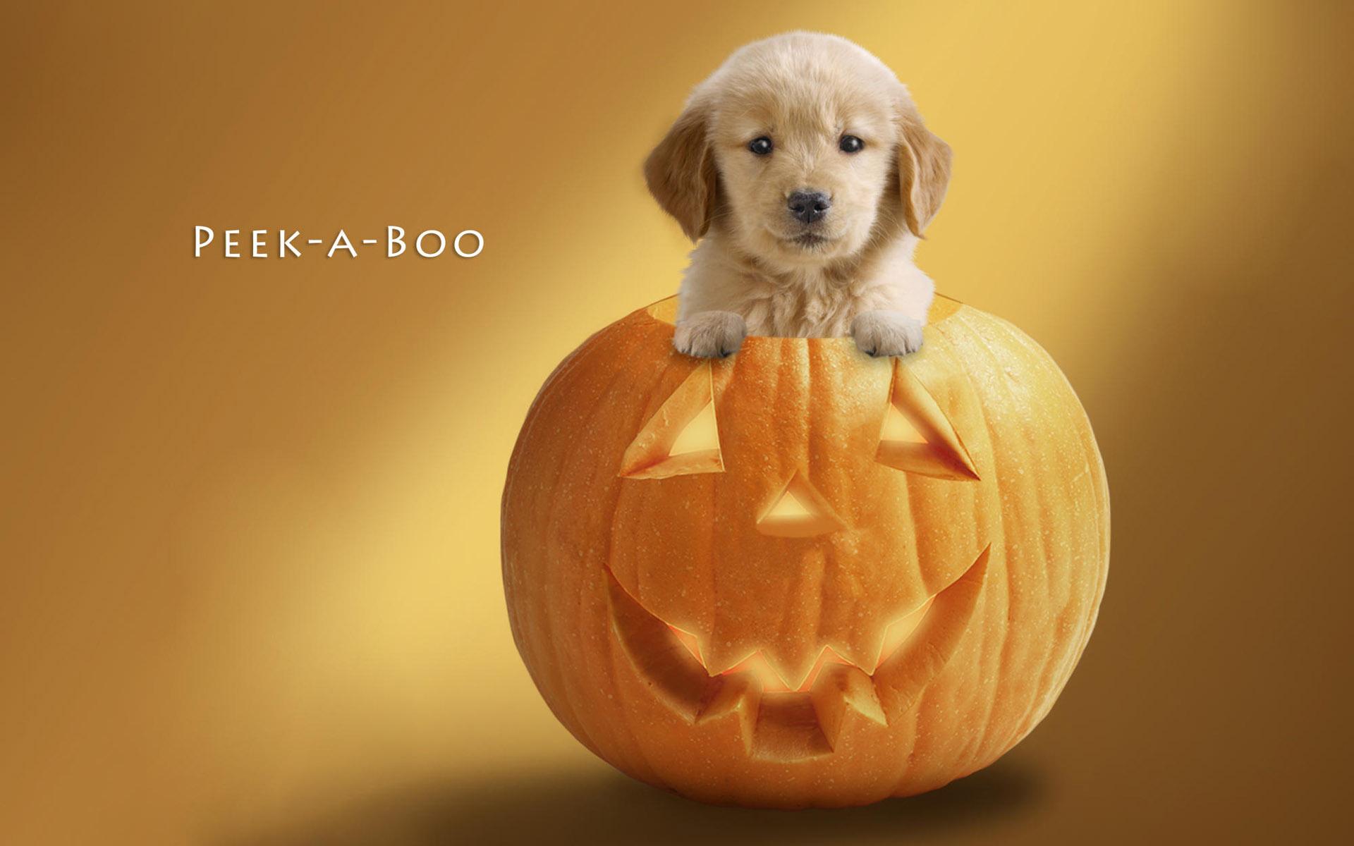 可用来v表情成QQ表情的各种搞笑狗狗图片3(20ppt背笑谁景搞情图包我片表是图片