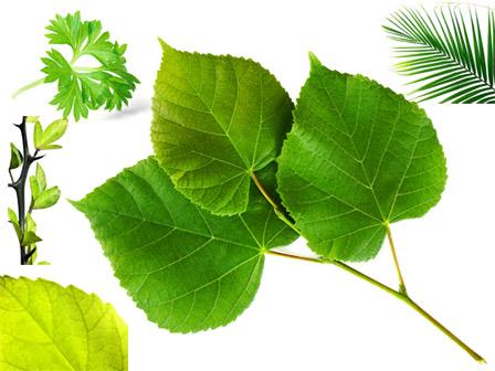 绿叶--大全高清高清设计素材下载[中国photos设计感家庭装修效果图图片图片