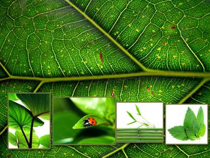 白底几种绿色植物叶子纹理设计素材高清图片打包下载