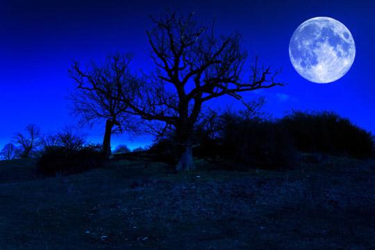 海边恐怖木屋蝙蝠白色月亮黑暗意境背景素材高清图片下载   树枝上