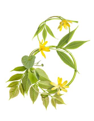 高清白底绿色叶子植物藤拼成8字三八妇女节设计素材图片下载