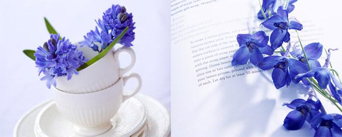 2张高清唯美蓝色花朵静物写真摄影图片素材下载