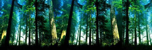 大霧彌漫參天大樹森林透進陽光寬幅風景圖片素材下載