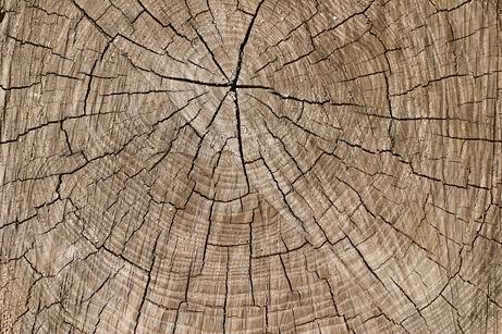 木头年轮裂纹纹理材质贴图素材高清图片下载