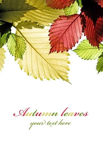 高清透明紅黃綠葉子白背景圖片素材下載