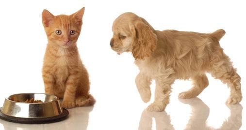 四只可爱的穿着衣服的宠物狗白底素材高清图