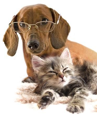狗狗 背景/白背景戴眼镜的狗和猫趴着高清图片素材下载...