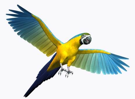 白背景展翅飞翔的3d鹦鹉高清图片素材下载
