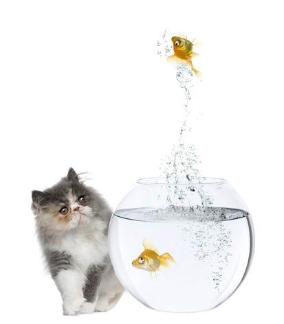 高清白底猫咪与透明玻璃金鱼缸里跳出的金鱼素材图