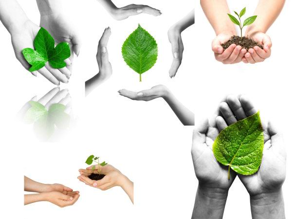 5张高清手捧土壤植物绿色叶子白底环保概念图片素材打包免费下载