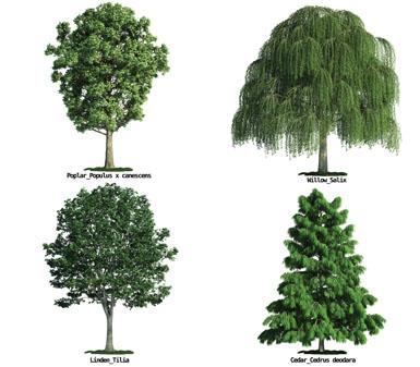 白背景园林景观绿化树木设计素材高清图片下载
