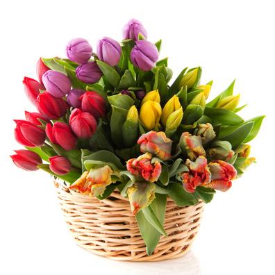 白背景木桶里的郁金香花素材高清图片下载