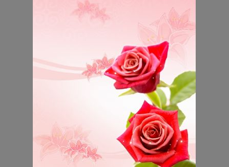 玫瑰花朵展板背景模板psd素材清新的大红玫瑰花背景展板模板