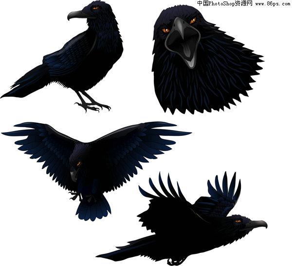 ai格式逼真绘制乌鸦矢量图免费下载