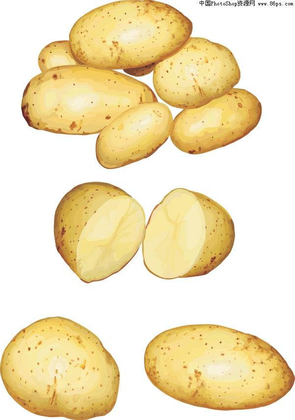 AI格式,含JPG预览图,关键字:矢量蔬菜,土豆,写实风格,马铃薯,农作物,矢量素材... | 水馨  AI后缀的文件是指通过Adobe Illustrator(简称AI)软件储存得到的图片格式 这种格式的图片是矢量的,也就是说像freehand,Coreldraw那样子的图片可以随意放大但不失真的那种   它和photoshop是同属Adobe公司的产品.